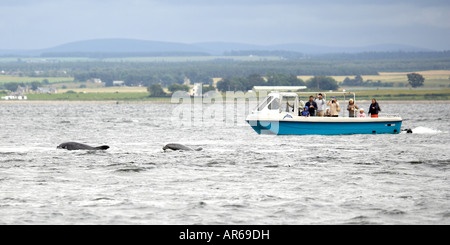 People watching Bottlenose dolphins from a boat Tursiops truncatus off Chanonray Point Moray Firth Ross Shire Scotland - Stock Photo