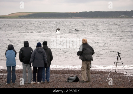 People watching Bottlenose dolphins Tursiops truncatus leaping off Chanonray Point Moray Firth Ross Shire Scotland - Stock Photo