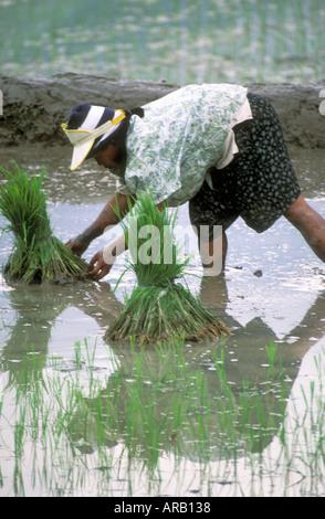 rices landing women Southwestern pennsylvania water authority will shut off water service in rices landing water service upgrades planned in rices landing but don't blame women.