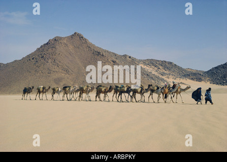 Tuareg and wife leading camel train through the desert near Djanet, Algeria, North Africa - Stock Photo