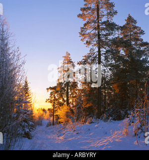 Winter sunset in the forest near Oslo, Norway, Scandinavia, Europe - Stock Photo