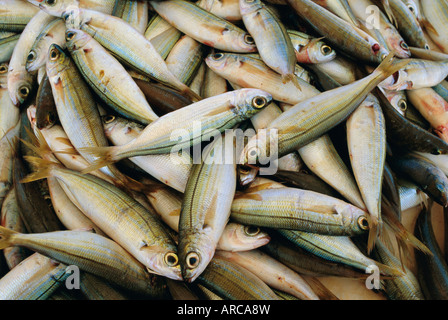 Close up of fish in market, Mykonos, Cyclades Islands, Greece, Europe - Stock Photo