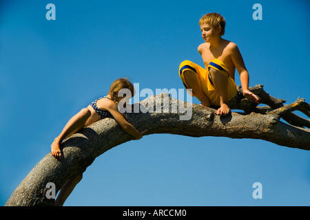 A boy watches his younger sister climb up a tree branch in Laguna Beach CA - Stock Photo