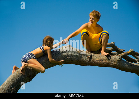 A boy gives his younger sister a helping hand as she climbs up a tree branch in Laguna Beach CA - Stock Photo