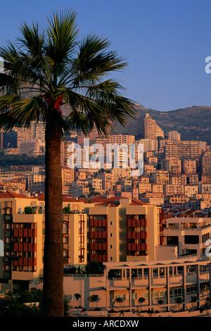 High rise buildings at sunrise, palm tree in foreground, La Condamine, Monaco, Europe - Stock Photo