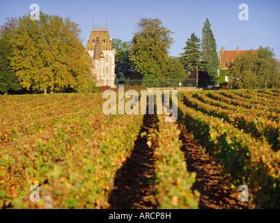 Vineyards, Aloxe Corton, Cote d'Or, Burgundy, France, Europe - Stock Photo