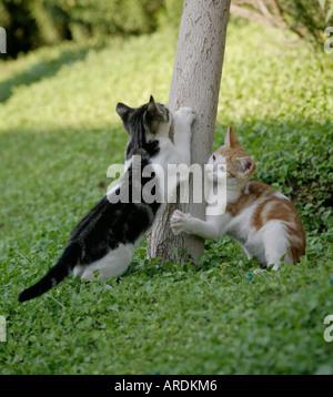Cute wild kittens sharpening claws - Stock Photo