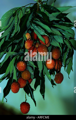Lichies growing on a tree - Stock Photo