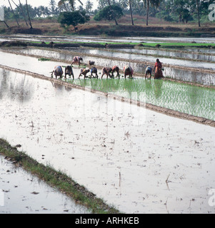 People working in paddy fields in the south of Goa, India - Stock Photo