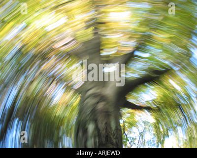 Frog eye view of autumnal tree with yellow leaves and blue skies in motion blur - Stock Photo