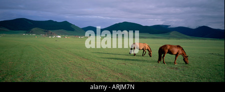Horses grazing in Orkhon valley, Ovorkhangai Province, Mongolia, Central Asia, Asia - Stock Photo