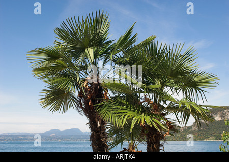 Palm trees growing next to the lake Garda Lake Garda Italy - Stock Photo