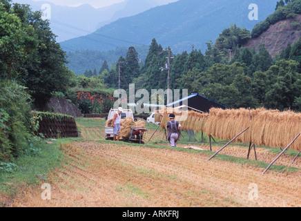 Harvest of rice, Japan - Stock Photo