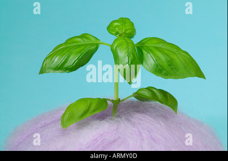 Impossible growth - Stock Photo