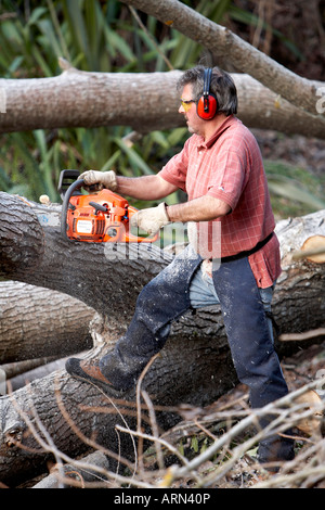 Man 63 using chainsaw to cut large tree into timber - Stock Photo