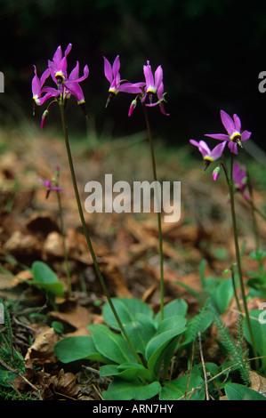 Wildflowers in bloom, British Columbia, Canada. - Stock Photo