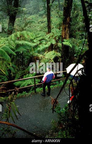 A young man looks at a cluster of ferns growing in a rainforest in Hawaii Volcanoes National Park near Hilo Big - Stock Photo