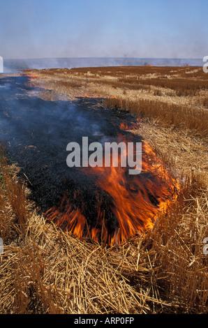 USA, Washington State, Palouse area wheat field with stubble being burned - Stock Photo