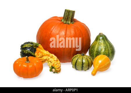 Several Varieties of Gourds and Pumpkins - Stock Photo