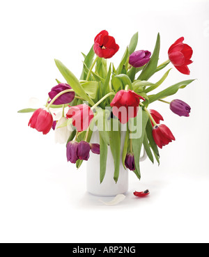 tulips in white vase - Stock Photo