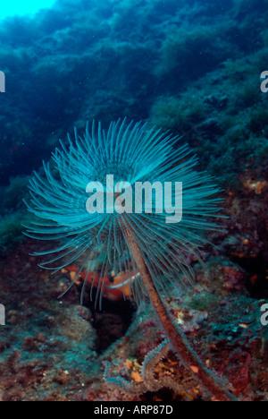 Sea life in the Mediterranean Sea - Stock Photo