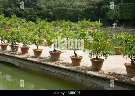 Giardino di Boboli Boboli Gardens Florence Italy, Lemon trees in pots - Stock Photo