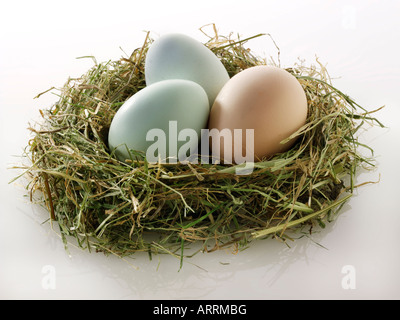 Old Cotswold Legbar chicken eggs in a nest - Stock Photo