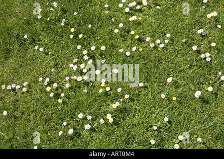 Daisies in the grass - Stock Photo