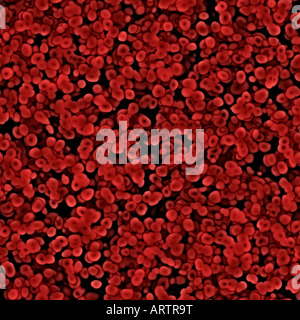 seamless image lots of red blood cells under the microscope - Stock Photo