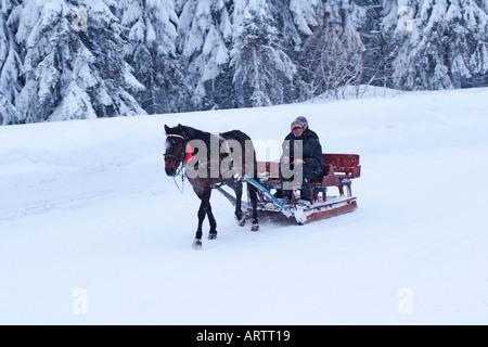 horse drawn sled in kopaonik village - Stock Photo