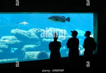 Visitors at the shipwrecked themed Sea World Aquarium ...