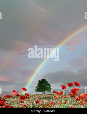 FOUR SEASONS:  Summer - Stock Photo