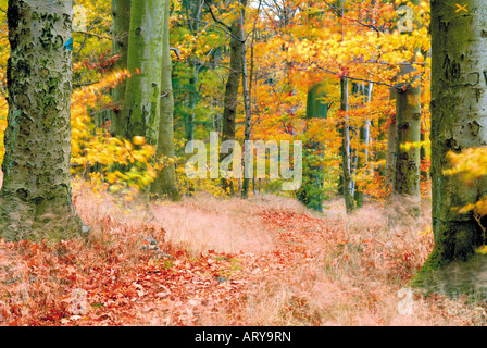 Forest in Autumn, Nature Park Odenwald, Germany - Stock Photo