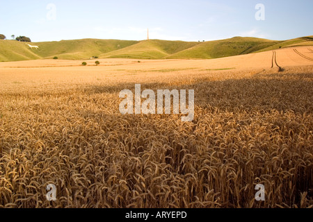 golden Barley field with white horse and monument Cherhill Down Near Avebury Wiltshire Summer 2006 - Stock Photo