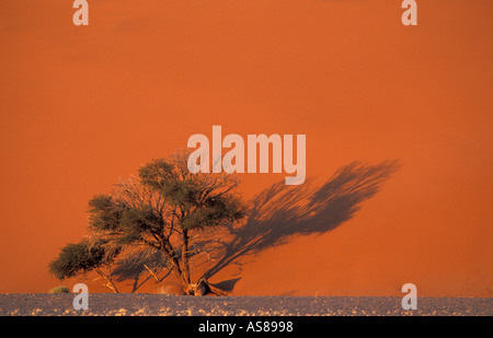 Early morning sun lights Dune 45 a golden red Namib Naukluft National Park Namibia - Stock Photo