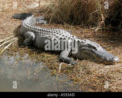Shark Valley Visitor s Center Everglades National Park Florida Tamiami Trail - Stock Photo