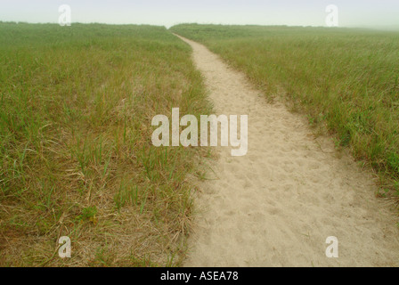 sandy path through beach grass and dunes on a foggy day - Stock Photo