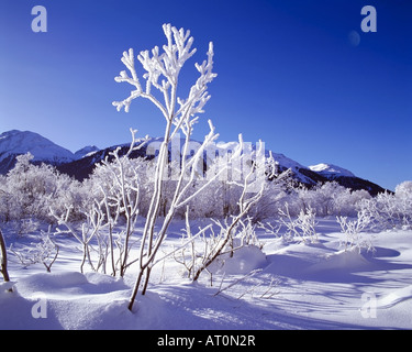 CH - UPPER ENGADIN: Winterscene near Samedan - Stock Photo
