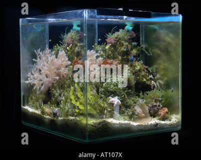 Nano Reef, small tropical marine aquarium. - Stock Photo