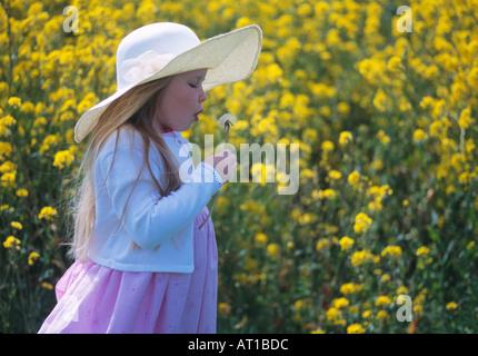 Little girl in hat blowing dandelion in field of  yellow rapeseed flower - Stock Photo