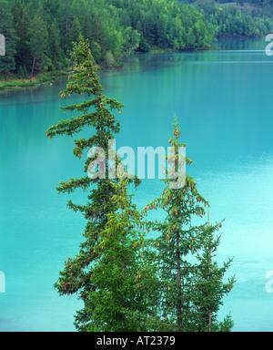 Siberian spruce Picea obovata with Kanas Lake behind Kanas Lake Nature Reserve Altay Mountains Xinjiang northwest - Stock Photo
