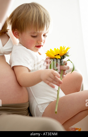 A young boy sitting on his mother's knee looking at a sunflower - Stock Photo