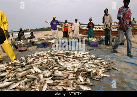 The Gambia Gunjur fishing sorting the catch - Stock Photo
