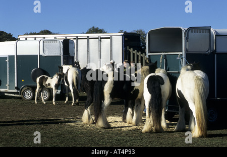 Horses at Stow Horse Fair, Stow-on-the-Wold, Gloucestershire, England, UK - Stock Photo