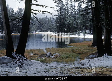 WINTER cloaks the forest surrounding a pond along TIOGA PASS Road YOSEMITE NATIONAL PARK CA - Stock Photo