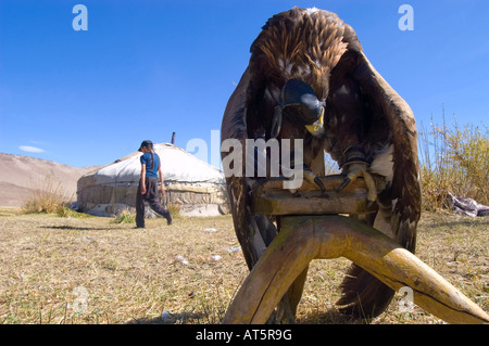 A golden eagle collapses after the trauma of training and being held captive. - Stock Photo