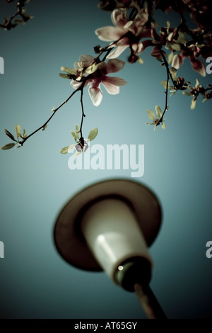 Blossoming Tree and street lamp, close-up - Stock Photo