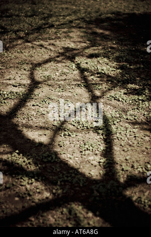 Shadow of a tree, close-up - Stock Photo