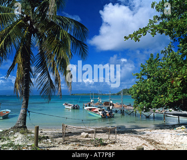 Petit Havre beach and cove with palm tree, Guadeloupe, French West Indies - Stock Photo