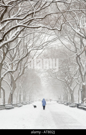 Woman walking her dog during a snowstorm at The Mall in Central Park NYC - Stock Photo